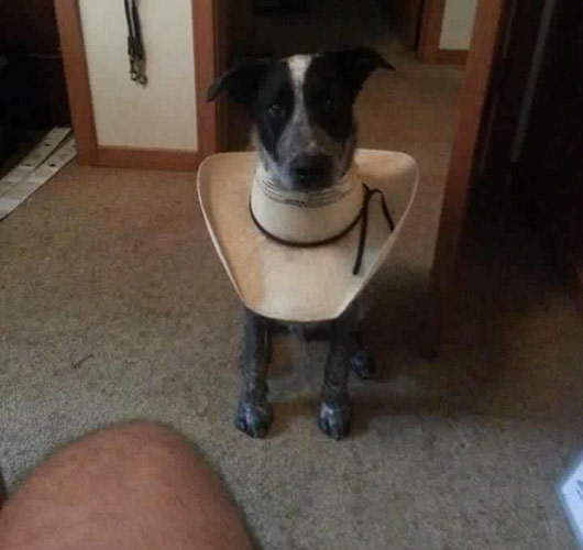 Dog with homemade cowboy hat cone Reddit still