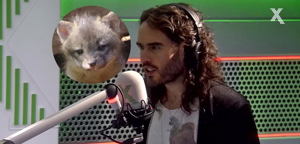 Russell Brand and his baby fox